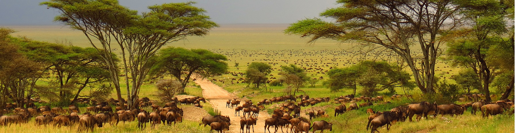 Kenya bush, beaches, & cities